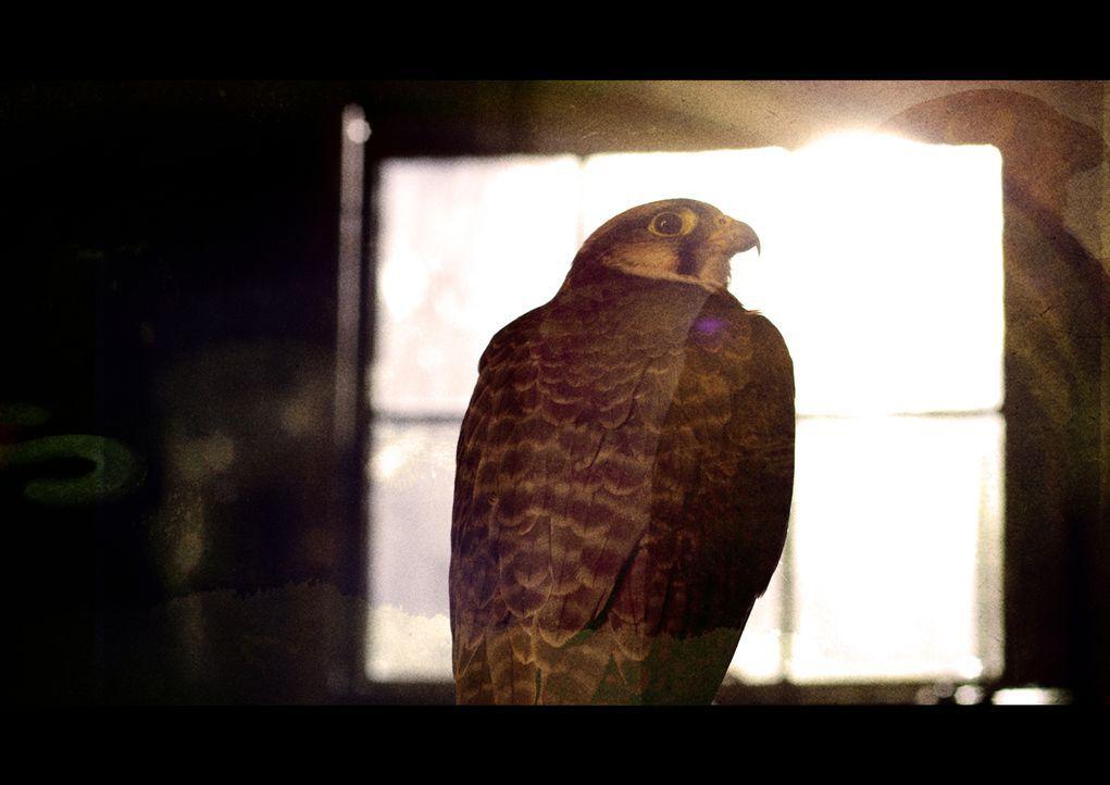 """Steckt die Sonne hinter den geheimnisvollen Vogel-Todesfällen bei Ivanpah? """"Wunder der Wissenschaft"""" klärt auf... - Bildquelle: BBC 2015"""