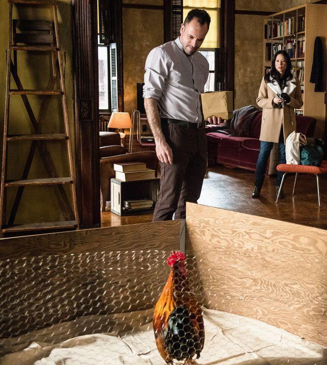 Holmes (Jonny Lee Miller, l.) nötigt Watson (Lucy Liu, r.) dazu, sein neuestes Privatprojekt in Augenschein zu nehmen: Er kümmert sich um einen alte... - Bildquelle: CBS Television