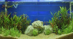 Aquarium Einrichten Tipps Zur Innengestaltung Sat 1 Ratgeber