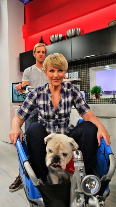 fruehstuecksfernsehen-studiohund-lotte-in-action-im-studio-012 - Bildquelle: Ingo Gauss