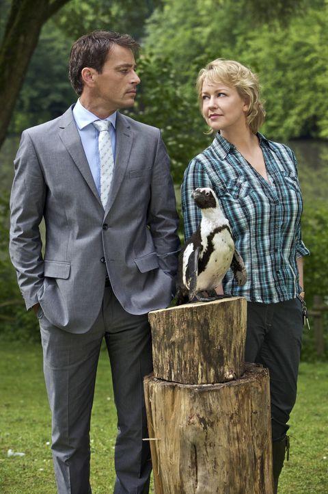 """Sonja Winter (Floriane Daniel, r.) kämpft um die Erhaltung ihres Zoos und den Verbleib von Pinguin """"Schulze"""". Dabei muss sie sich mit dem charmante... - Bildquelle: Sat.1"""