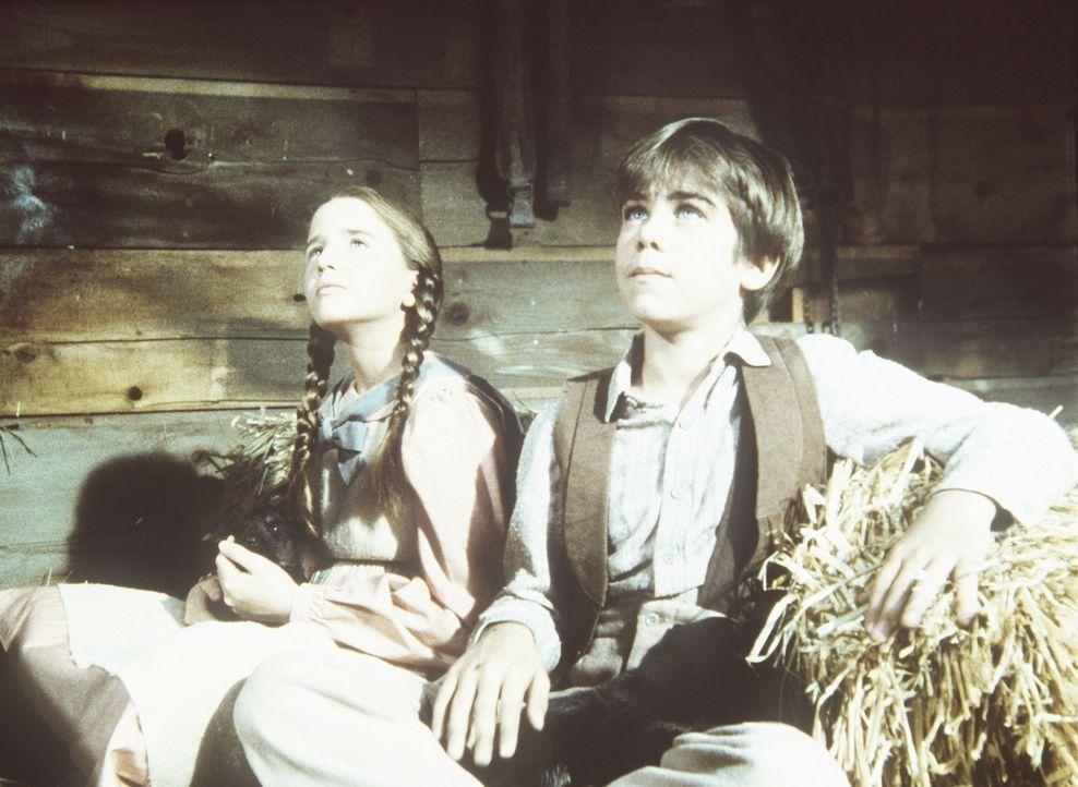 Andy Garvey (Patrick Laborteaux, r.) hat einen Wurf junger Wölfe gefunden, die er und Laura (Melissa Gilbert, l.) sofort ins Herz schließen. - Bildquelle: Worldvision