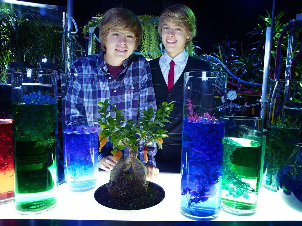 Geraten in eine lebensgefährliche Situation, als sie sich einem wissenschaftlichen Projekt zur Verfügung stellen: Cody (Cole Sprouse, r.) und Zack... - Bildquelle: 2010 Disney Enterprises, Inc. All rights reserved.