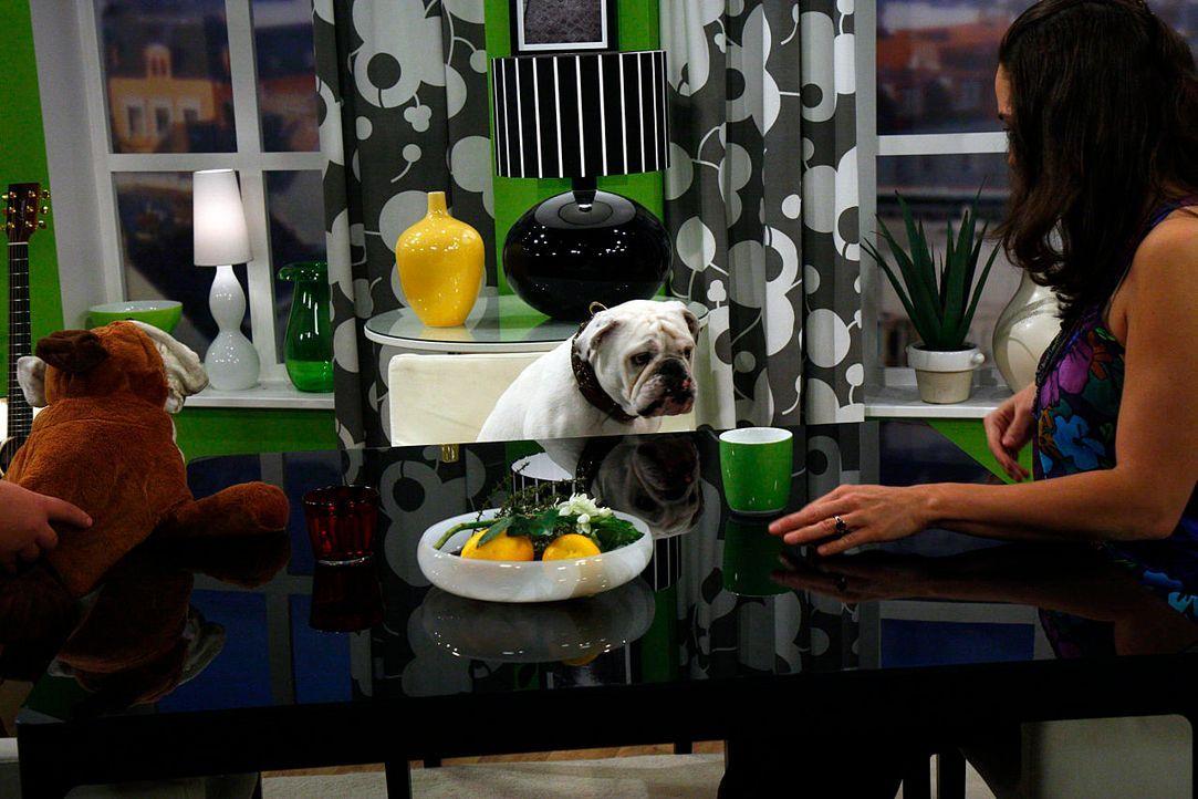 fruehstuecksfernsehen-studiohund-lotte-in-action-im-studio-095 - Bildquelle: Ingo Gauss