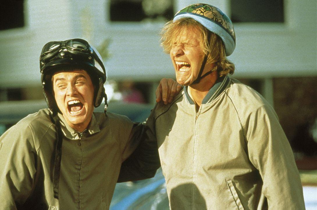 Llyod (Jim Carrey, l.) und Harry (Jeff Daniels, r.) sind zwei liebenswerte Trottel, die irgendwie gar nix zustande kriegen und alles falsch machen.... - Bildquelle: New Line Cinema