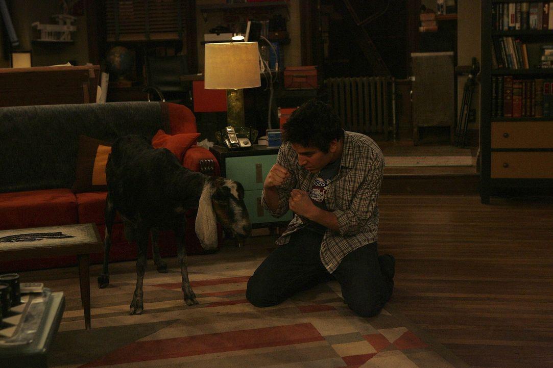Ted (Josh Radnor) versucht seine Präsentation fertig zu bekommen, doch dann wird er von einer Ziege, die Lily vor einiger Zeit vom Schlachter geret... - Bildquelle: 20th Century Fox International Television