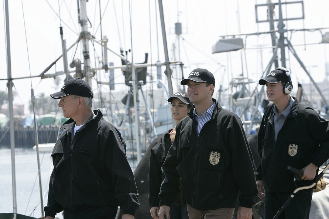 Haben einen neuen verzwicken Fall zu lösen: Gibbs (Mark Harmon, l.), Ziva (Cote de Pablo, 2.v.l.), Tony (Michael Weatherly, 2.v.r.) und McGee (Sean... - Bildquelle: CBS Television