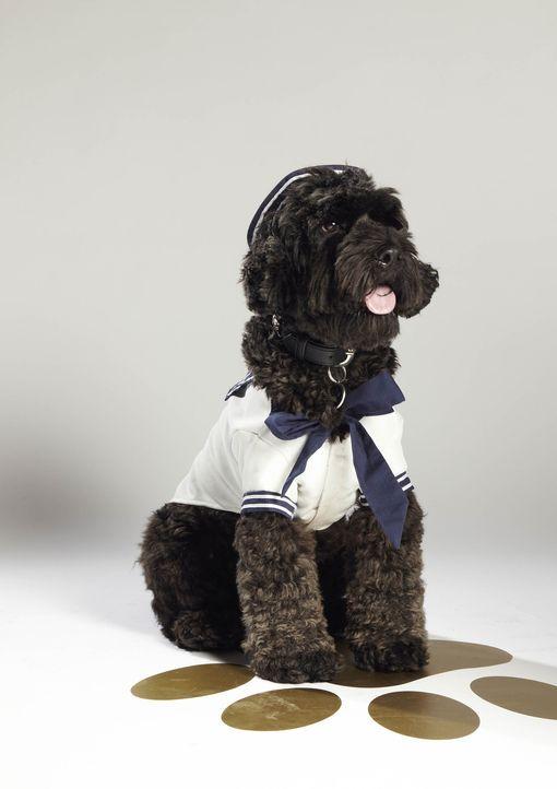 """Hat Kingston eine Chance, das nächste """"Top Dog Model"""" zu werden? - Bildquelle: 12 Yard Productions/ITV"""