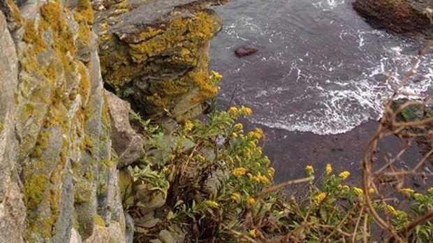 Die Felsenküsten in Newport sind der natürliche Lebensraum der Rotalge.
