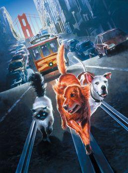Ein tierisches Trio - Wieder unterwegs - Die abenteuerlustigen Vierbeiner ger...