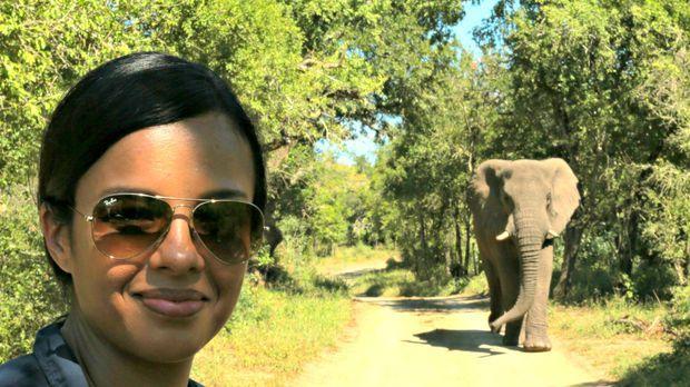 Liz Bonnin macht sich auf die Suche, die Frage zu klären, wie Tiere ihr Freun...