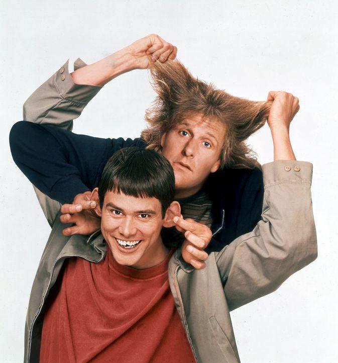 Keiner kann sie bremsen: Llyod (Jim Carrey, unten) und Harry (Jeff Daniels, oben) ... - Bildquelle: Warner Bros.
