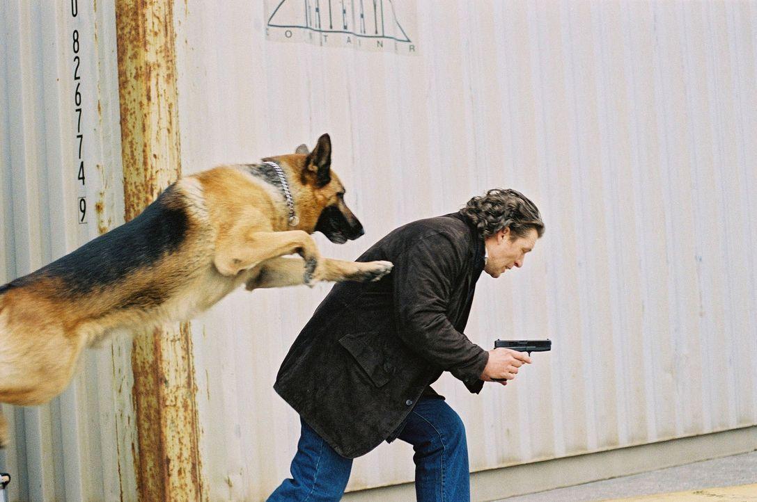 Rex gelingt es, Possling (Christoph Gareisen) zu stellen ... - Bildquelle: Ali Schafler Sat.1