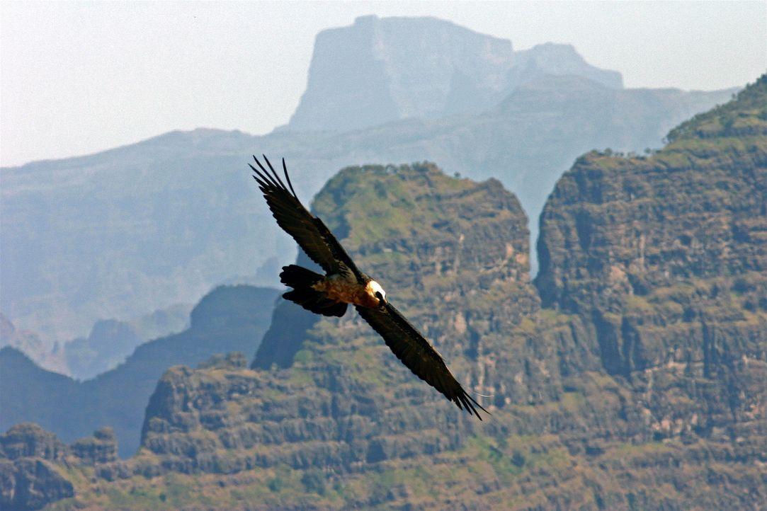 """Egal, ob Flügel oder Flossen, acht oder zwei Beine - """"Unser Leben"""" nimmt den Zuschauer auf eine einzigartige Reise an die schönsten Orte der Welt mi... - Bildquelle: Chadden Hunter"""