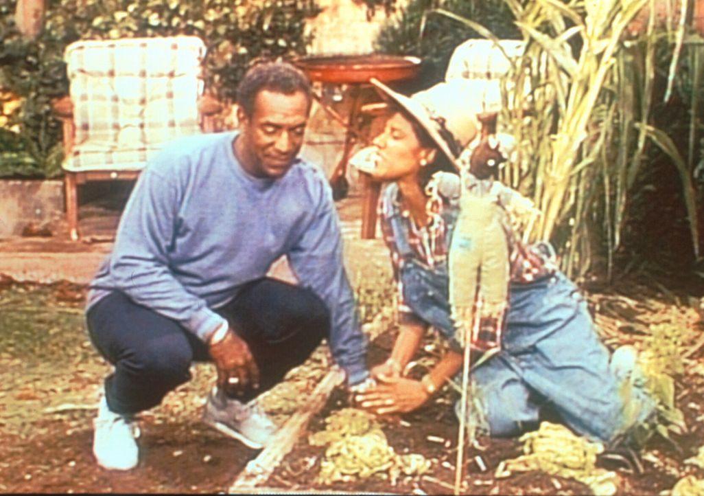 Clair (Phylicia Rashad, r.) und Cliff (Bill Cosby, l.) besprechen in Clairs Garten, was sie mit dem unglücklich verliebten Theo anfangen sollen. - Bildquelle: Viacom
