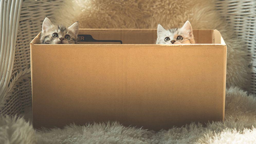 darum sind katzen so verr ckt nach kartons sat 1 ratgeber. Black Bedroom Furniture Sets. Home Design Ideas
