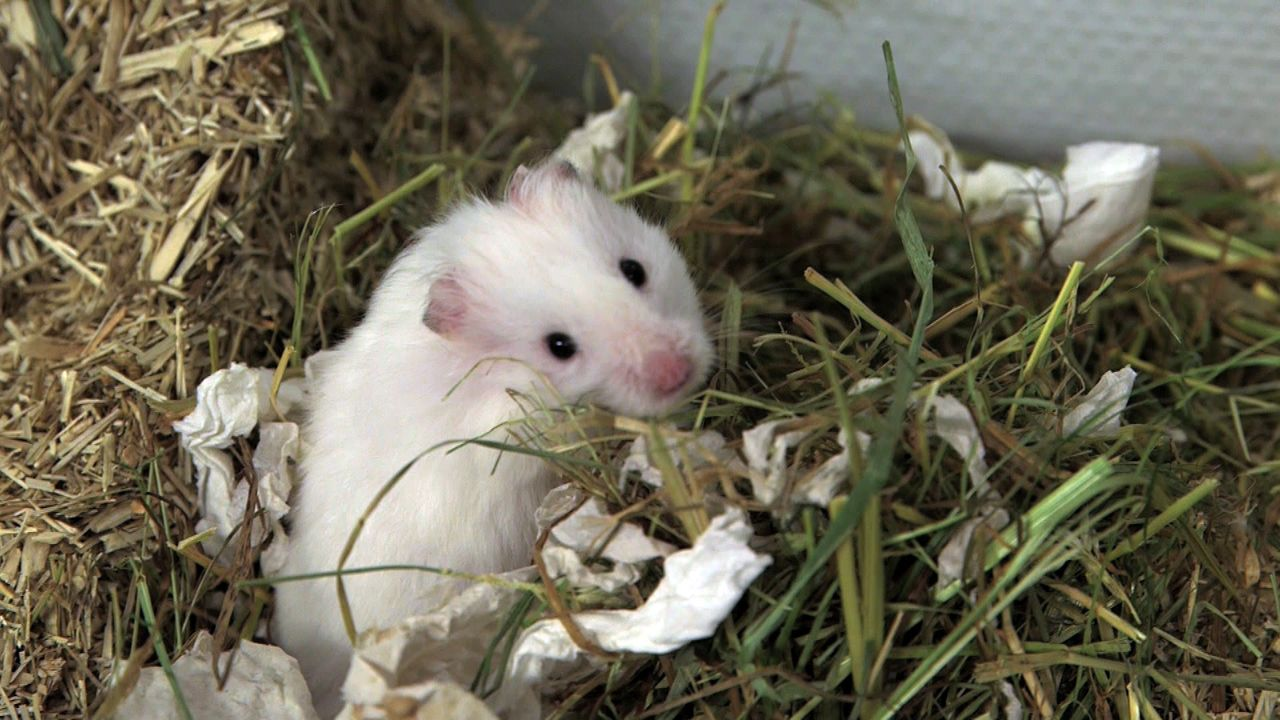 pbb-Hamster_10