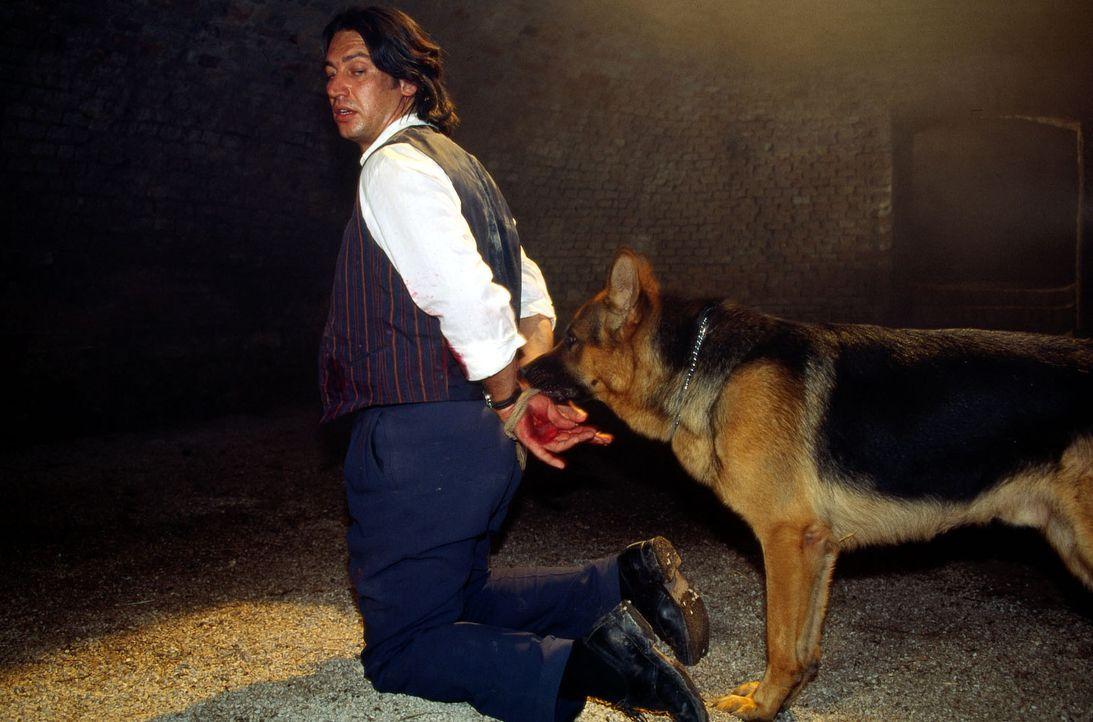 Kommissar Moser (Tobias Moretti) ist bei dem Versuch, eine Bande von Organschiebern zu verhaften, verletzt und gefangen genommen worden. Rex findet... - Bildquelle: Ali Schafler Sat.1