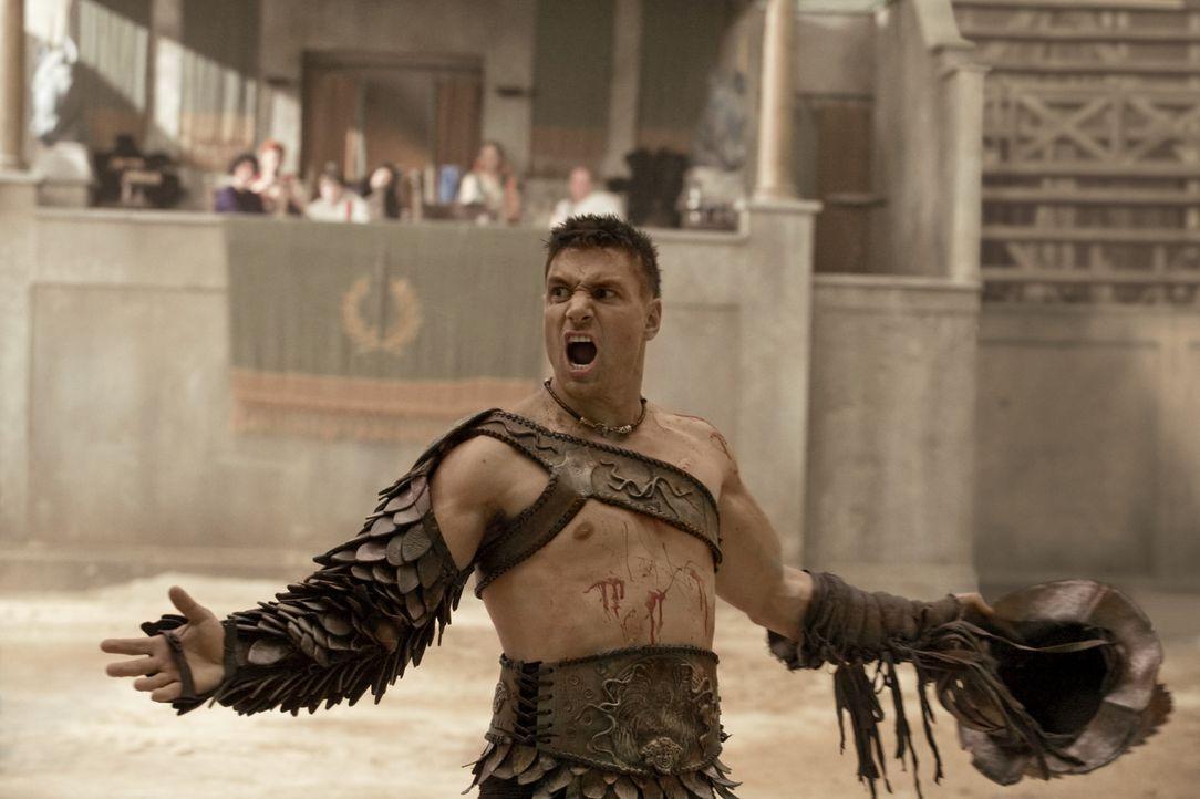 Während Crixus (Manu Bennett) einen Sieg in der Arena feiert, entwirft Spartacus einen Plan, wie er sich an Batiatus rächen kann ... - Bildquelle: 2010 Starz Entertainment, LLC