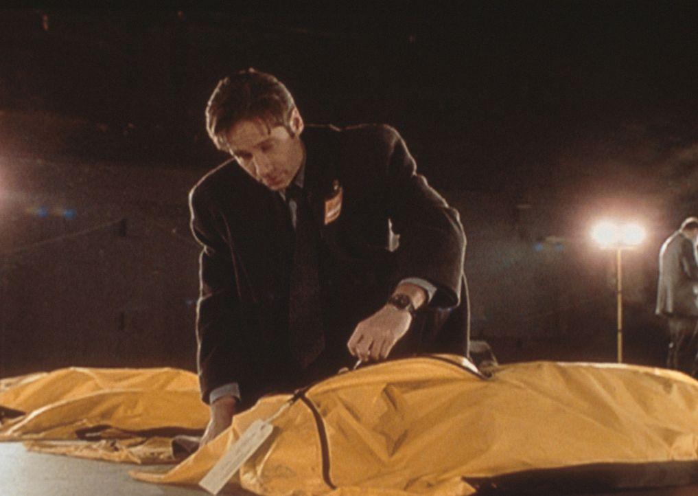 Mulder (David Duchovny) untersucht die Opfer eines Flugzeugabsturzes ... - Bildquelle: TM +   2000 Twentieth Century Fox Film Corporation. All Rights Reserved.