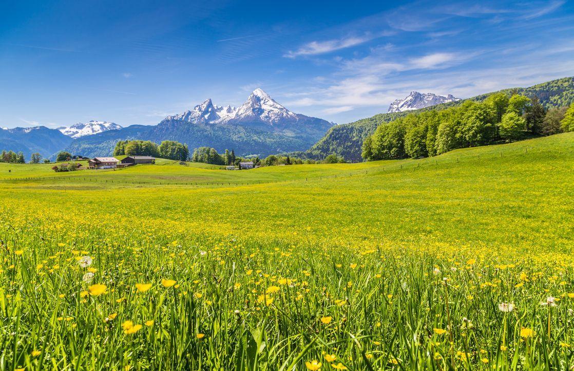 alpen-wiese-fotolia - Bildquelle: JFL Photography - Fotolia