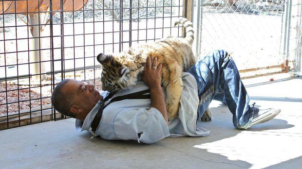 Karl Mitchell schreckt nicht einmal vor einem kleinen Kampf mit einem Tiger z...