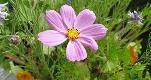 Essbare Blüten sind Balkon-Deko und praktisch zugleich: Sie schmücken Ihren A...
