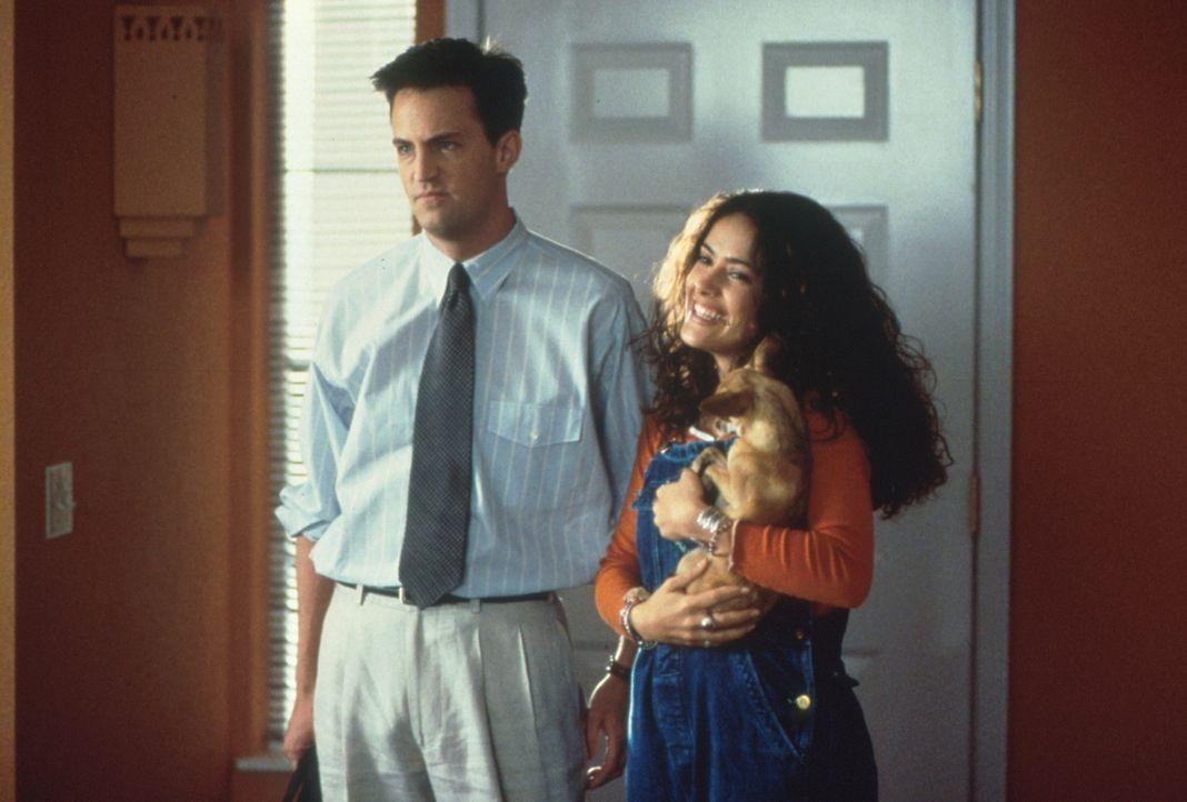 Als Isabel (Salma Hayek, r.) ihren Eltern Alex (Matthew Perry, l.) präsentiert, hält sich die Begeisterung  über deren zukünftigen Schwiegersohn in... - Bildquelle: Columbia Tri-Star