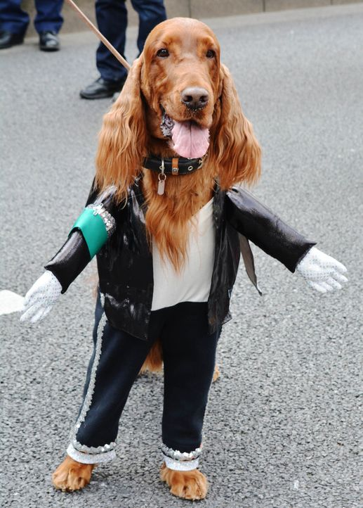 Michael-Jackson-Hund - Bildquelle: getty-AFP