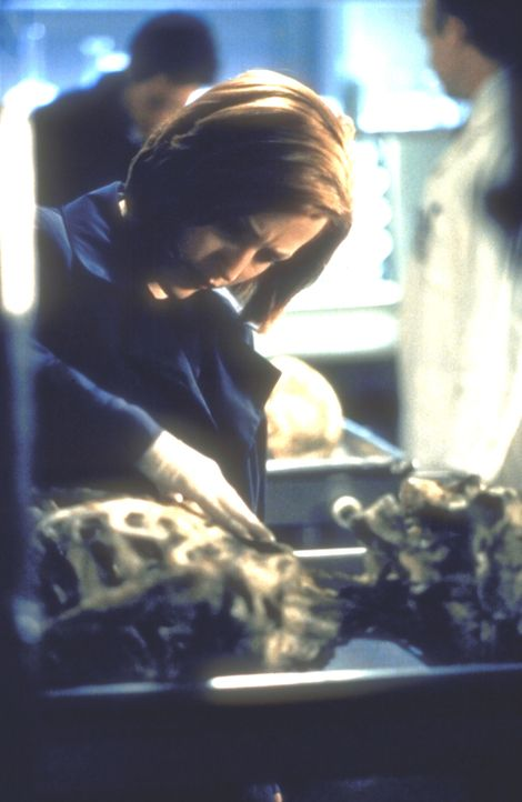 Scully (Gillian Anderson) entdeckt am Skelett eines Toten einen grünlichen Schleim ... - Bildquelle: TM +   2000 Twentieth Century Fox Film Corporation. All Rights Reserved.