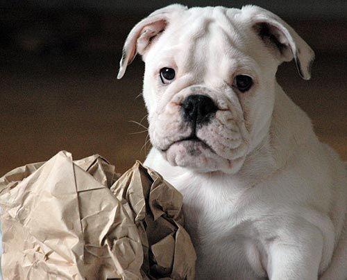 fruehstuecksfernsehen-studiohund-lotte-baby-021 - Bildquelle: Stefan Pulvermüller