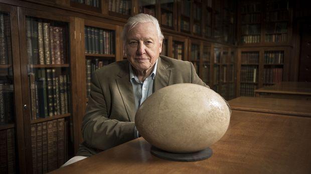 David Attenborough möchte wissen, was sich die Natur bei der Gestaltung von d...
