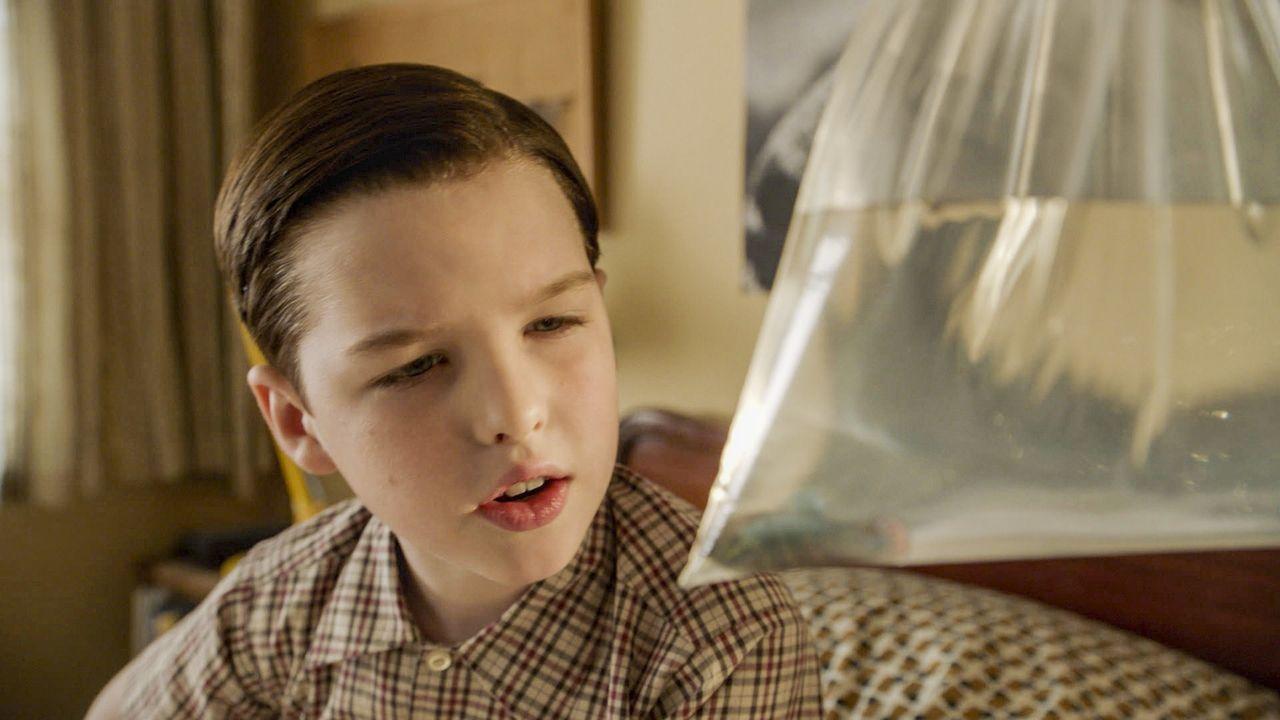 Ist ein Fisch vielleicht doch das bessere Haustier für Sheldon (Iain Armitage)? - Bildquelle: Warner Bros. Television