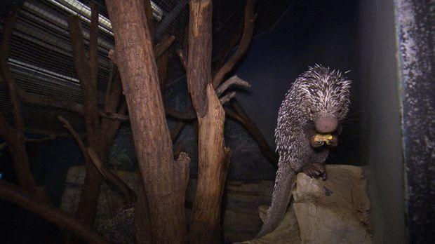 Nachts im Zoo