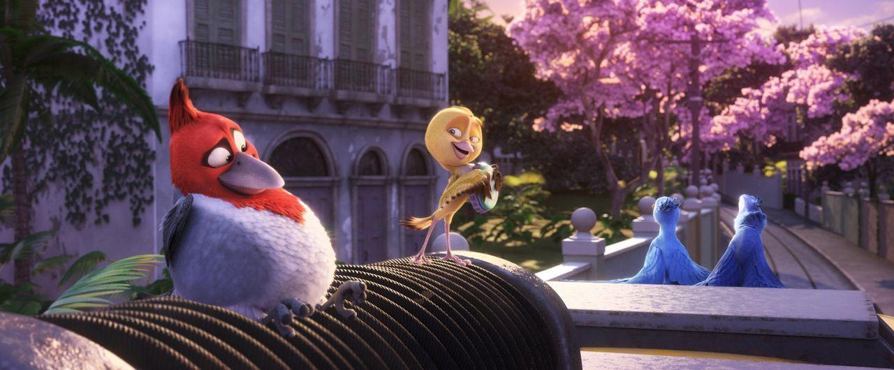 Erleben gemeinsam das Abenteuer ihres Lebens: Pedro (l.) und Nico (2.v.l.), Blu (r.) und Jewel (2.v.r.) ... - Bildquelle: Blue Sky Studios 2011 Twentieth Century Fox Film Corporation. All rights reserved.
