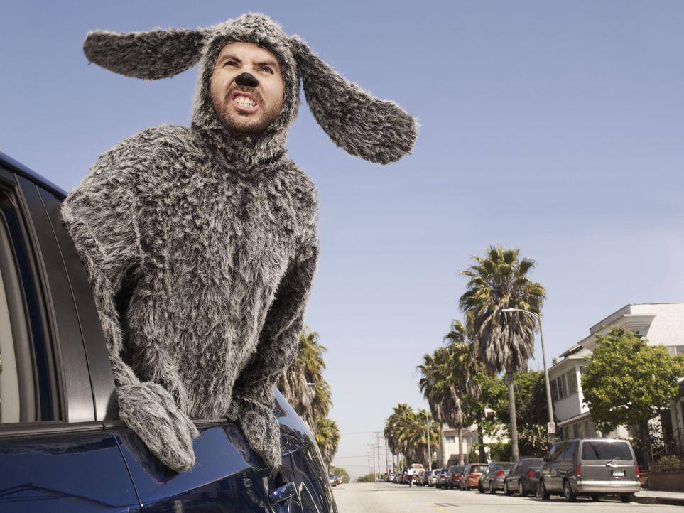(1. Staffel) - Der raubeinige Hund Wilfred (Jason Gann) sorgt immer wieder für Aufregung ... - Bildquelle: 2011 FX Networks, LLC. All rights reserved.