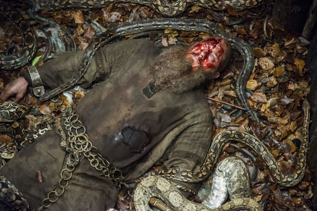 Kann Ragnar (Travis Fimmel) die Schlangengrube überleben? - Bildquelle: 2016 TM PRODUCTIONS LIMITED / T5 VIKINGS III PRODUCTIONS INC. ALL RIGHTS RESERVED.