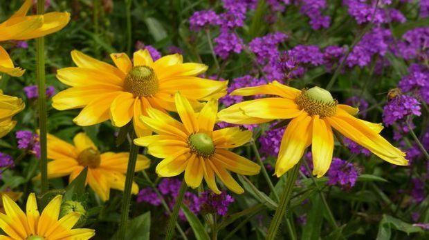 flowers-426906_1920