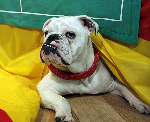 fruehstuecksfernsehen-studiohund-lotte-in-action-im-studio-026 - Bildquelle: Ingo Gauss