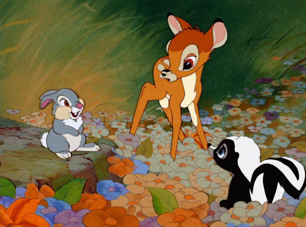 Gemeinsam erleben Klopfer (l.), Bambi (M.) und Blume (r.) viele aufregende Abenteuer im Wald ... - Bildquelle: Disney