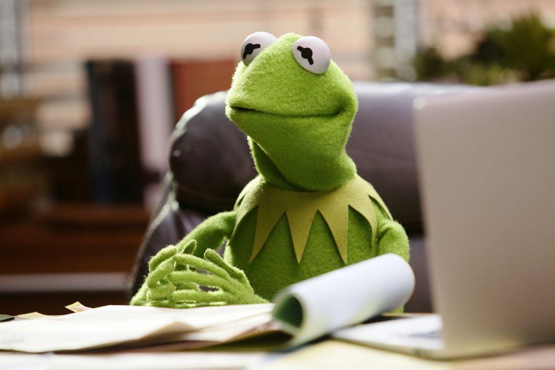 Kermit ist sauer, weil Miss Piggy ihn ausgetrickst hat ... - Bildquelle: Nicole Wilder ABC Studios