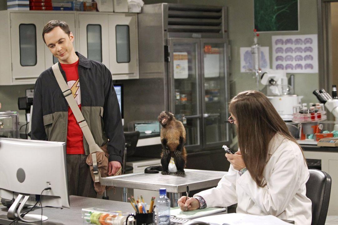 Sheldon (Jim Parsons, l.) muss sich entscheiden, wie viel Zeit mit Amy (Mayim Bialik, r.) zu viel für ihn ist, als sie einen Job an seiner Universit... - Bildquelle: Warner Bros. Television