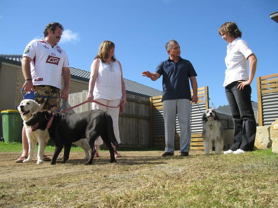 Cesar Millan (2.v.r.) macht sich auf den Weg nach Australien, um verzweifelten Hundebesitzern zu helfen und deren Vierbeiner von kleinen und großen... - Bildquelle: 2014 Rive Gauche Television. All rights reserved.