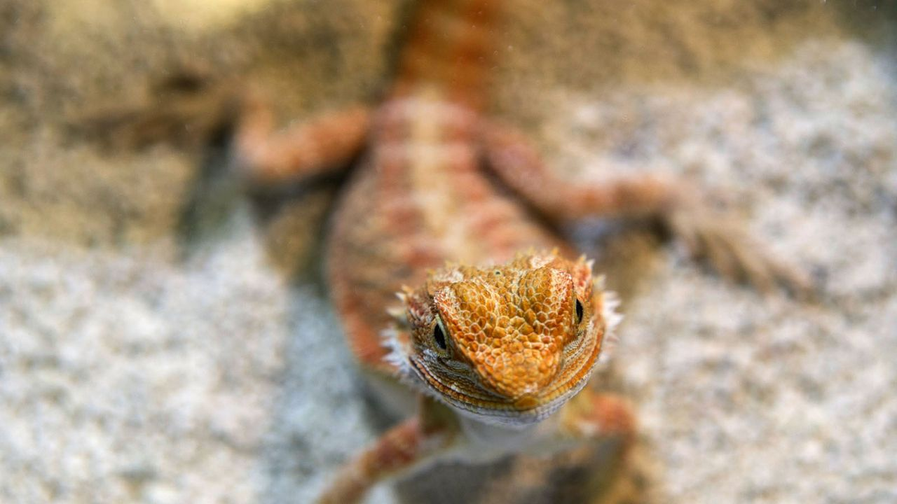 Reptil5 - Bildquelle: dpa