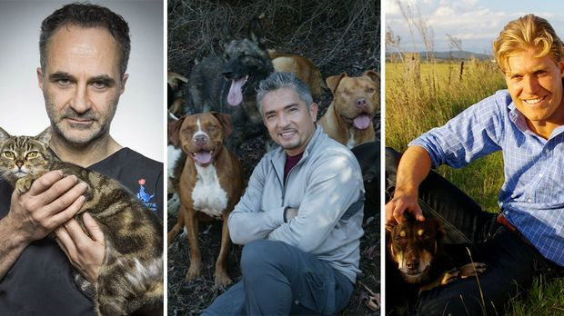 Der Super-Doc, Cesar Millan und Tierarzt Dr. Brown sind stets zur Stelle!