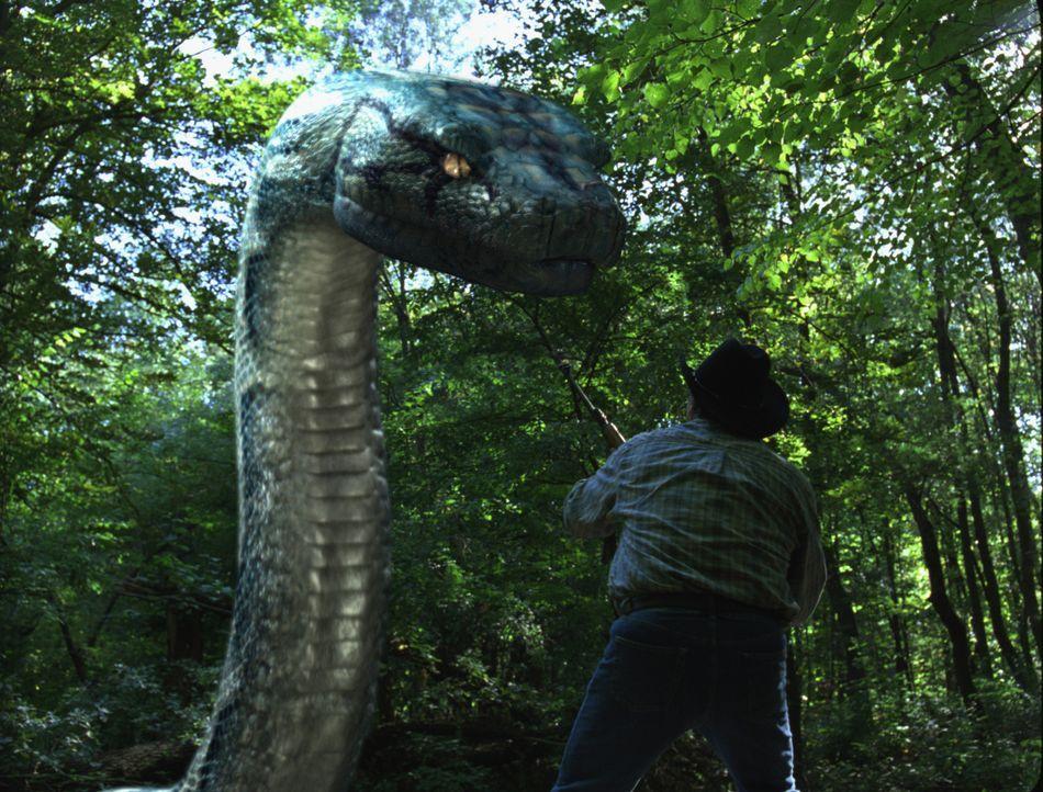 Als in einem privaten Wildpark eine riesige Python ausbricht, lässt das FBI eine ebenso große Boa frei, um das gefährliche Killerreptil außer Gefech... - Bildquelle: Sony Pictures Television International. All Rights Reserved.