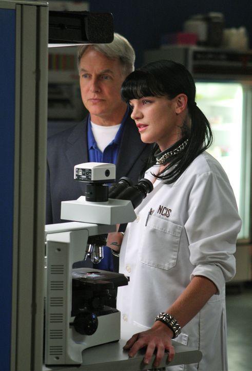 Ermitteln in einem neuen Mordfall: Gibbs (Mark Harmon, l.) und Abby (Pauley Perrette, r.) ... - Bildquelle: CBS Television
