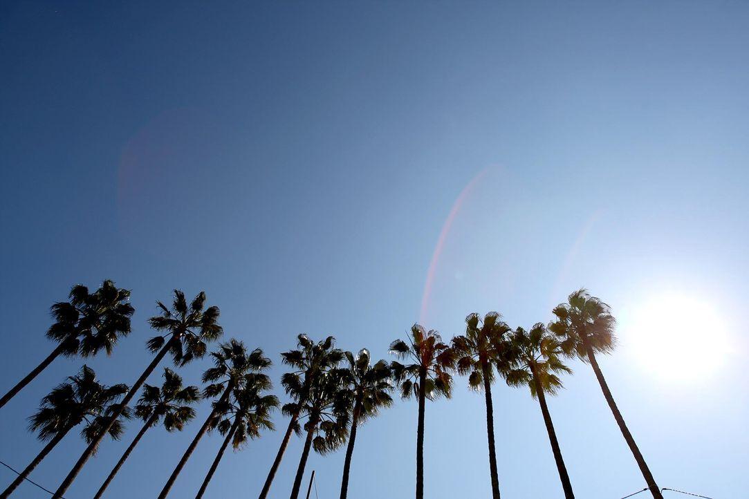 Cannes-Palmen-AFP - Bildquelle: AFP Photo/Valery Hache