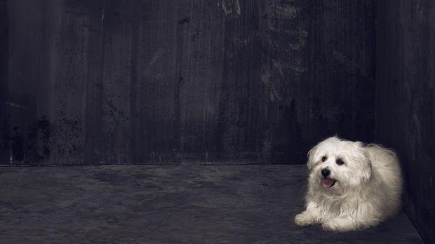 Hund_PBB