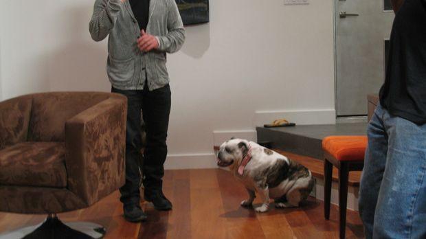 Hunde mit Verhaltensstörungen sind alles andere als eine lustige Angelegenhei...